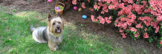 Ben Hosts Easter Egg Hunt