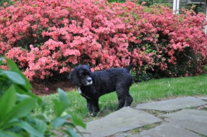 Zoe stops to smell the flowers.